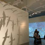 Výstava v DOXu - Petr Sís